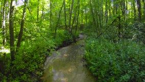 小河在夏天森林里 股票视频
