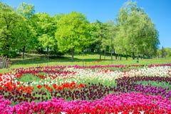 Πεδίο των τουλιπών στο πάρκο Στοκ φωτογραφία με δικαίωμα ελεύθερης χρήσης