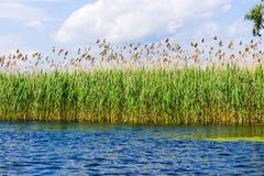 多瑙河三角洲 免版税库存照片