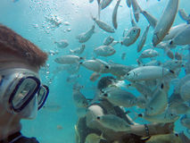 背景男孩潜水查出屏蔽水肺微笑的白色 免版税库存图片