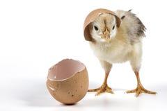 布罗肯峰蛋壳 库存照片