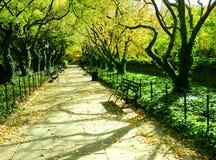 运输路线被排行的公园结构树 免版税库存图片