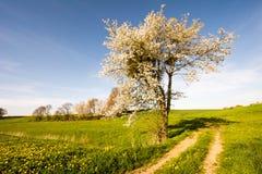 与开花的树的风景 免版税库存图片