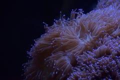 Водоросли мира воды Стоковое Изображение