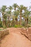 绿洲在摩洛哥 库存照片