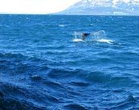 Кит в Северном море Стоковое Изображение