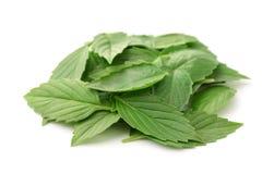 Куча свежих листьев базилика Стоковая Фотография RF