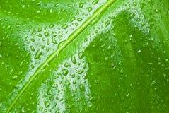 αφηρημένο πράσινο φύλλο ανασκόπησης τροπικό Στοκ Εικόνες