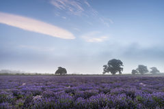 在淡紫色领域的美好的剧烈的有薄雾的日出风景我 免版税库存图片
