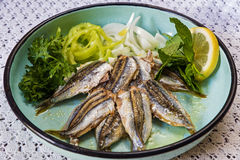 煮熟的沙丁鱼 库存图片