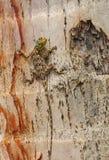 蜥蜴朝向红色 库存照片