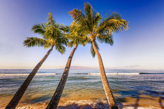 棕榈树和太平洋在夏威夷 库存照片