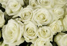 花束玫瑰色婚礼白色 库存图片