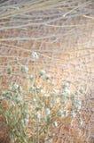 Ραβδί και ξηρό λουλούδι στο υπόβαθρο δαντελλών Στοκ Φωτογραφίες