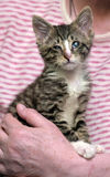 Λίγο γατάκι με τα άρρωστα μάτια Στοκ Εικόνες