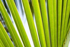 Πολύβλαστο πράσινο αφηρημένο τροπικό υπόβαθρο φύλλων φοινικών Στοκ Εικόνες