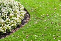 白色花圃和绿草 免版税库存照片