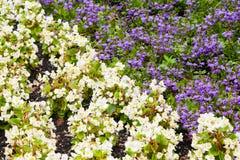 白色和紫罗兰色装饰花 免版税库存照片