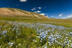 调遣与野花和山在背景 库存图片