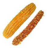 煮沸的在白色隔绝的玉米和玉米棒 免版税库存照片
