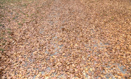 秋叶地毯 库存照片