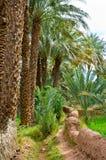 Όαση στο Μαρόκο Στοκ Φωτογραφία