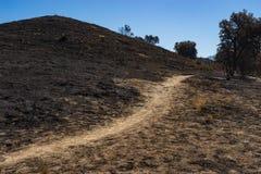 Горный склон сгорели лесным пожаром, который Стоковые Изображения