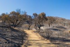 Путь в, который сгорели глушь Стоковое Фото