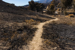 След песка в ожоге лесного пожара Стоковое Фото