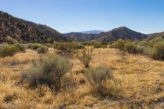 Λιβάδια της ερήμου της Καλιφόρνιας Στοκ Φωτογραφίες