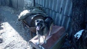 Собака в деревне Стоковые Фотографии RF