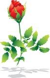 查出的红色玫瑰色影子 免版税库存照片