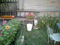 пинки котенка Стоковая Фотография