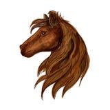 Портрет эскиза головы лошади Брайна Стоковые Изображения RF