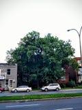 树 免版税库存图片