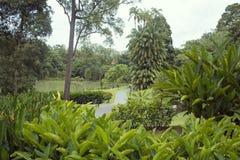 Βοτανικός κήπος της Σιγκαπούρης Στοκ Φωτογραφίες