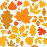 秋天 无缝的模式 在白色背景的摘要叶子 库存图片