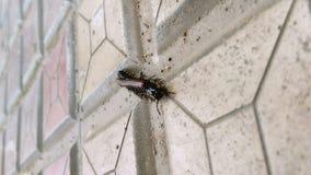 蜈蚣 免版税库存照片