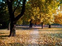秋天,公园 免版税库存照片