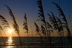 海滩草日落 库存照片
