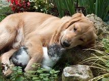 собака кота Стоковое Изображение RF