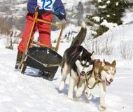 розвальни собаки Стоковая Фотография RF