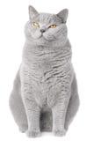 кот сонный Стоковые Фотографии RF