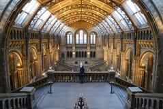 自然历史记录的博物馆 免版税库存照片