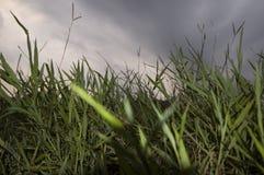 причаливая шторм Стоковые Фотографии RF