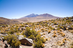 玻利维亚沙漠 库存照片