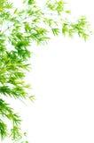 竹子离开青绿 免版税库存照片