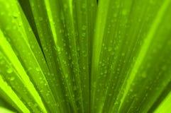 绿色叶子掌上型计算机 免版税库存照片