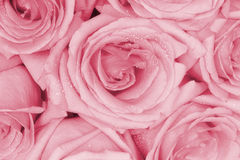 花束桃红色玫瑰 免版税库存照片