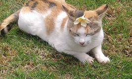 猫 图库摄影